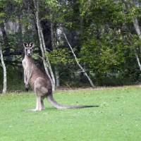 Friendly local wildlife